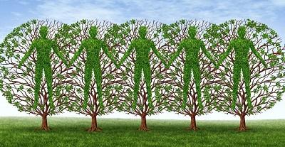 Деревья имеют интеллект и общаются друг с другом