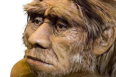 Иммунитет человека сформировали неандертальцы