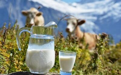 Молоко – самый полезный продукт для мозга