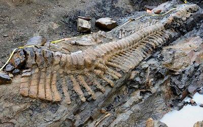 Останки 30-метровой особи динозавра нашли в Аргентине