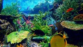 Остановить изменения климата может морская бактерия