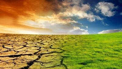 Растения мигрируют из-за изменения климата