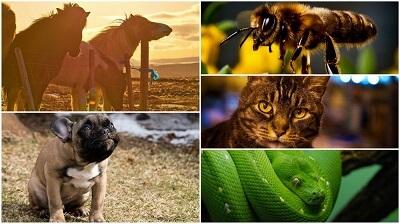 Ученые назвали 5 животных, способных лечить людей