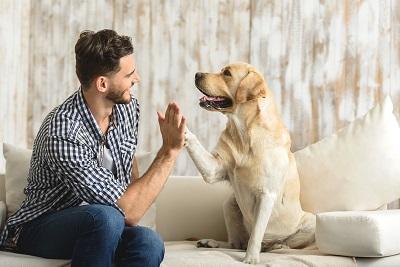 Ученые выяснили, почему собаки дружат с людьми