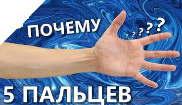 Ученые выяснили, почему у человека пять пальцев