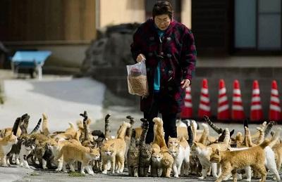 В Японии собаки и кошки признаны долгожителями