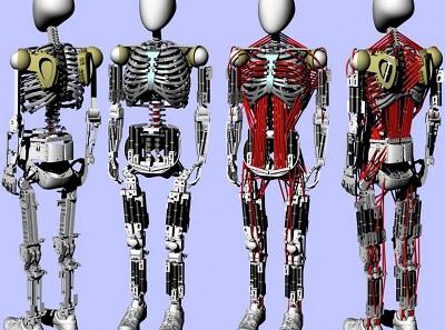 В Японии создали робота с человеческими мышцами