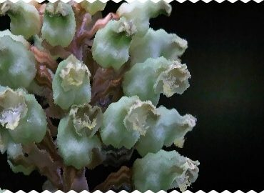 В Японии ученые обнаружили «инопланетное» растение