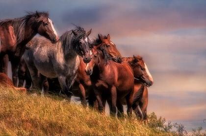 Лошадь может обращаться к людям за помощью