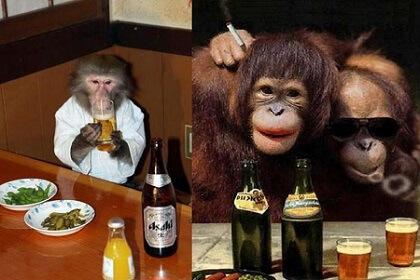 Обезьяна стала человеком благодаря алкоголю
