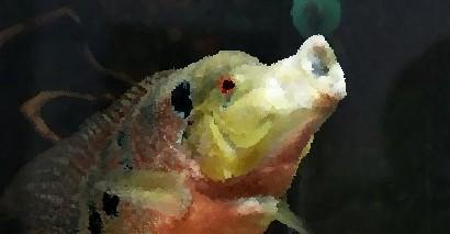 Рыбы могут распознавать человеческие лица