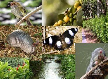Что такое биологические Виды