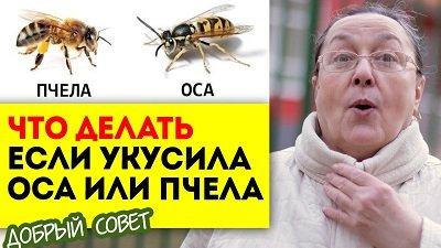 Что делеать если вас укусила пчела или оса?