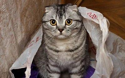 Что делать, если кошка съела пакет