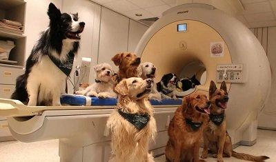 Что покажет МРТ у животных?