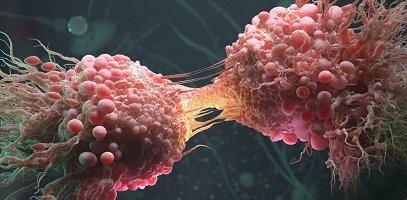 Определены стволовые клетки рака
