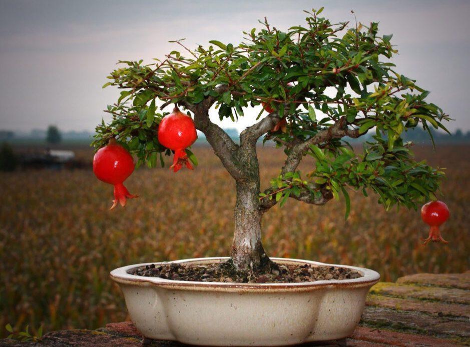 Два нестандартных растения для дома, которые завораживают своим видом